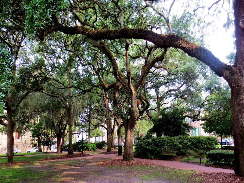 Live oaks shade historic town squares. Azaleas spread beneath the oak canopy. Couples walk the pathways hand-in-hand or sit side-by-side on the benches. A fountain dances in the dappled sunlight