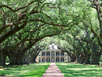 Opulent mansions stand majestically beneath lush oak canopies in Savannah.